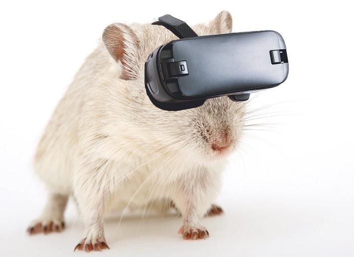 une souris portant un casque VR